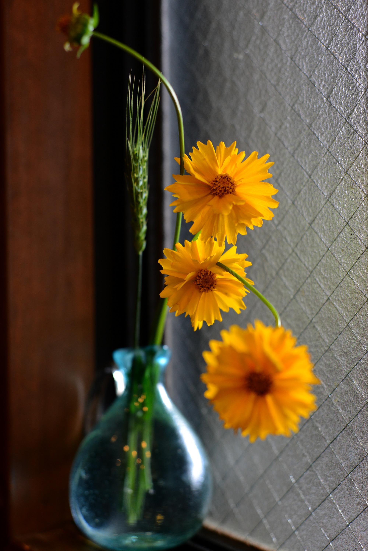 黄色の花の写真