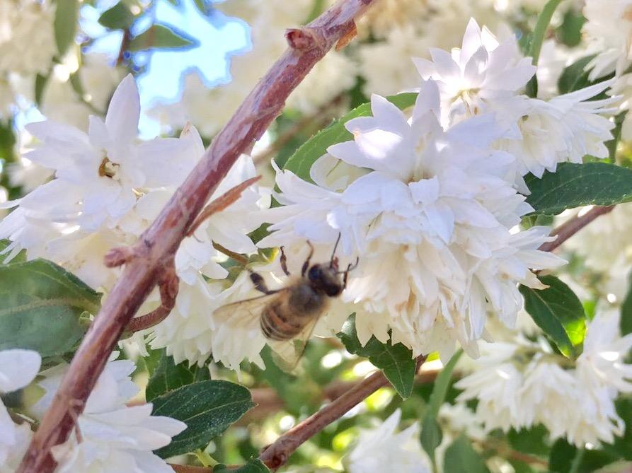 空木とハチさんの写真
