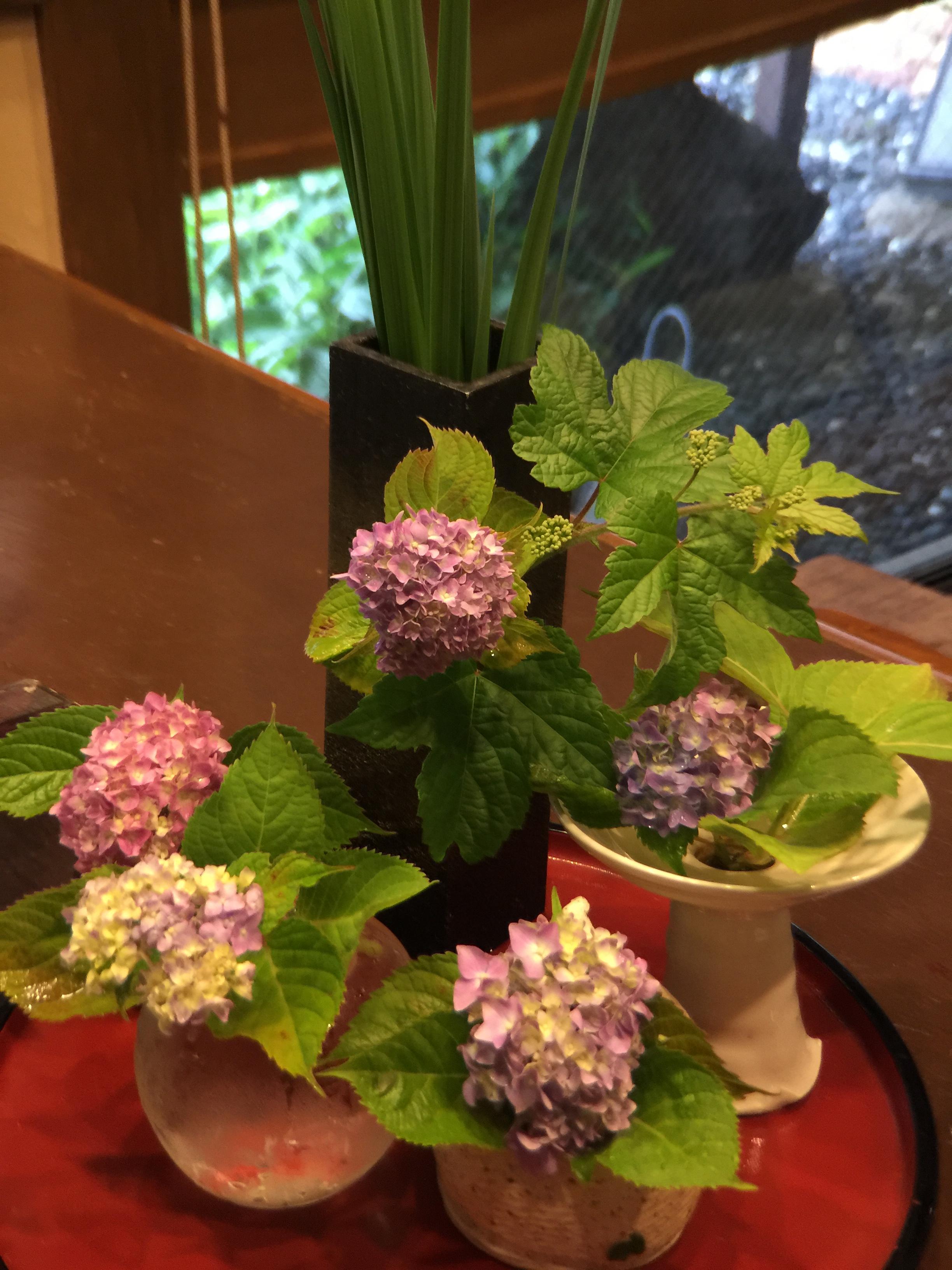 紫陽花が咲きましたねの写真