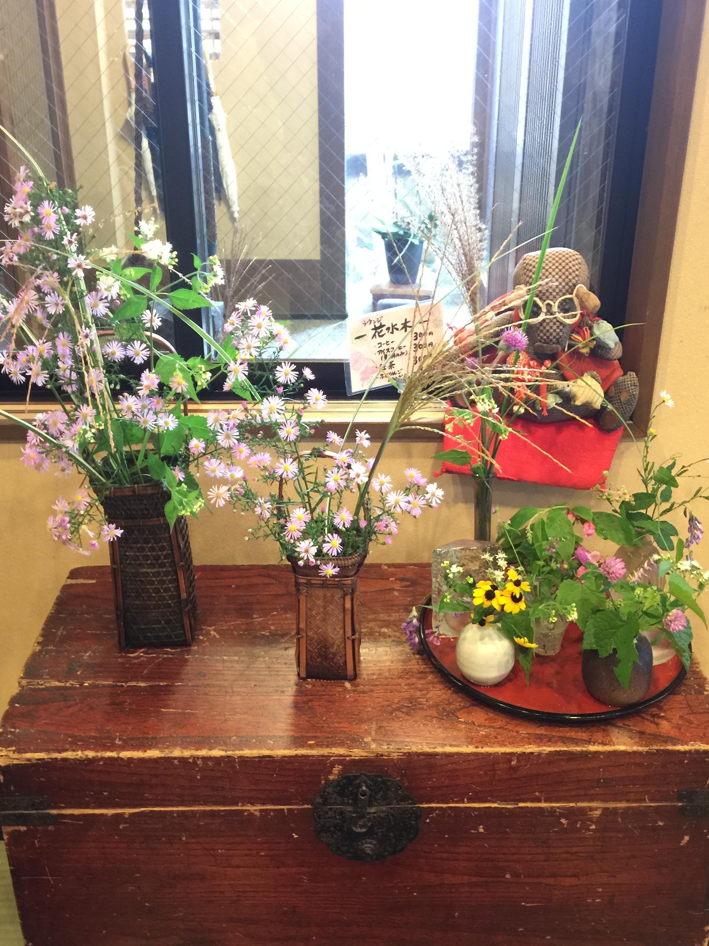 今日の花たちの写真